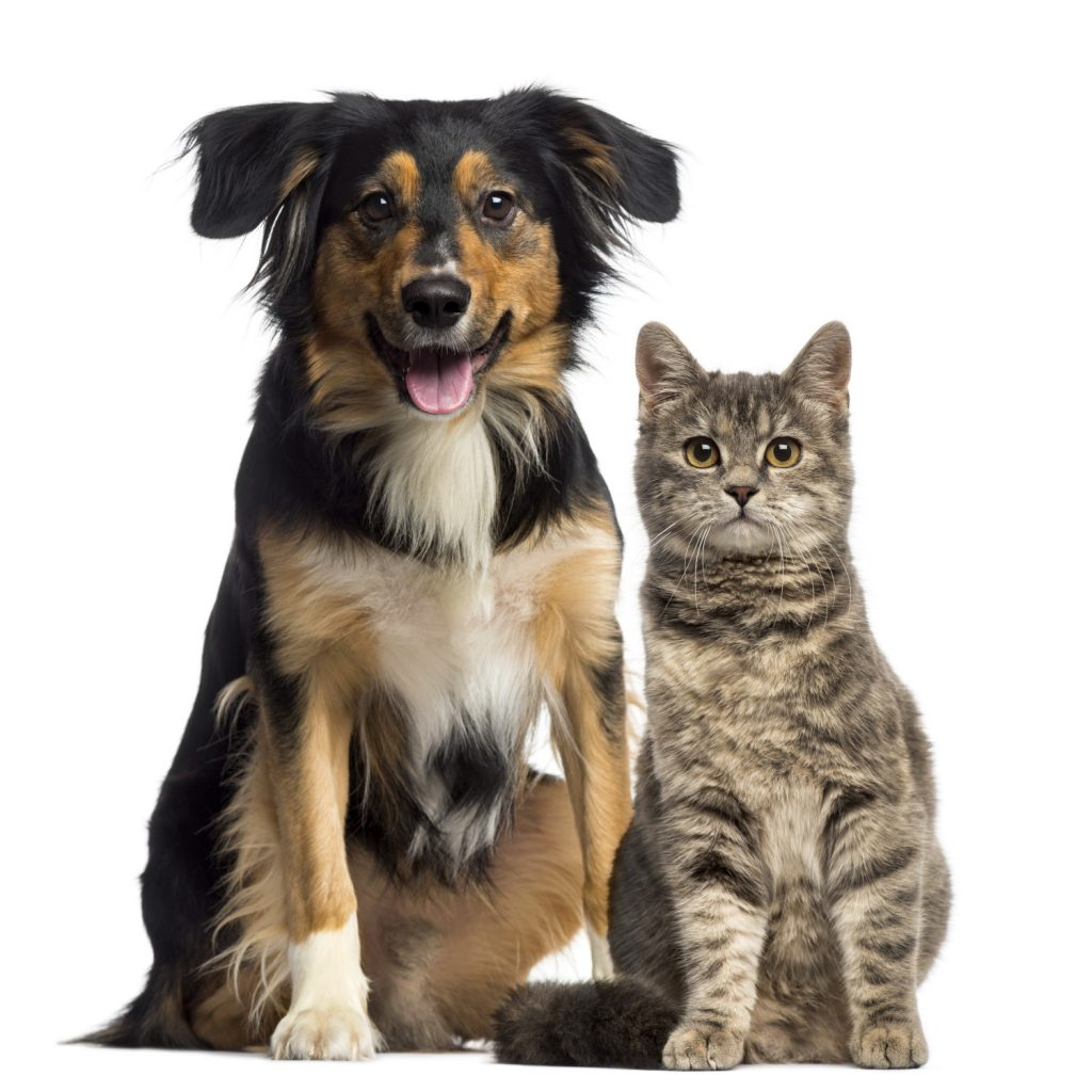 Dog and cat sitting together